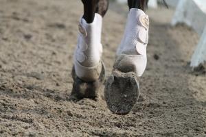 Alles over het hout van de paardenbak